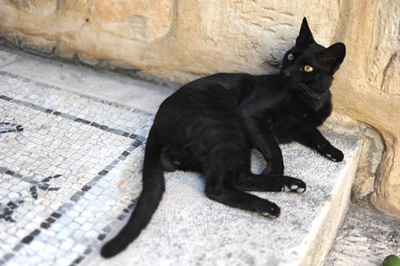 Black cat resting on the stairs of the Bir Ya'qub monastery where Jacob's Well lies, in Nablus, West Bank
