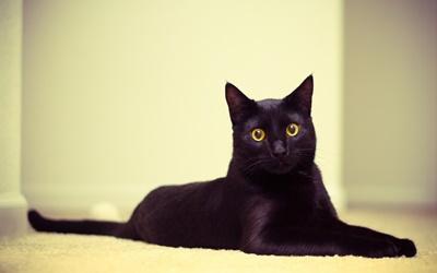 black014cat