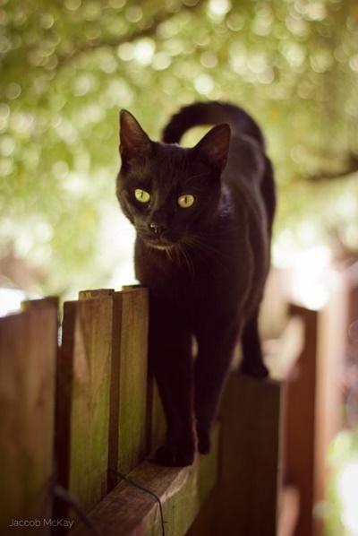 black015cat