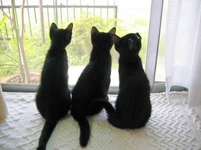 black016cat