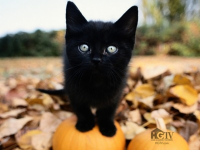 black017cat