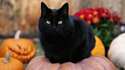 black018cat