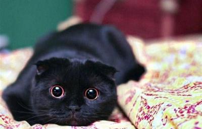 black019cat