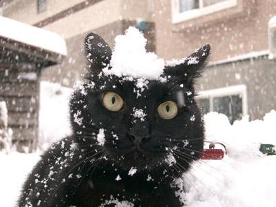 black020cat