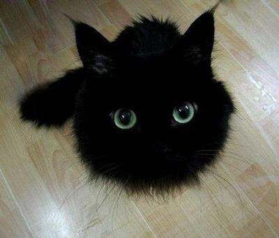 black021cat