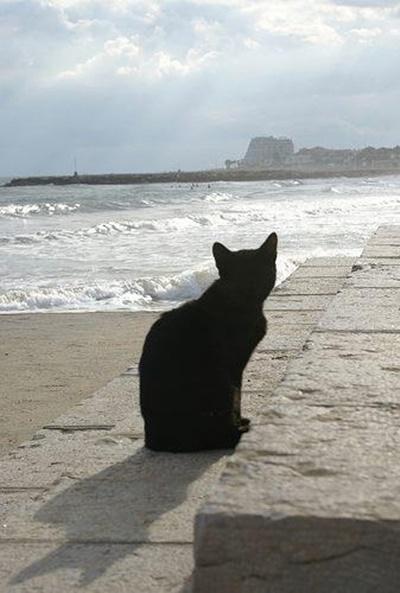 black023cat