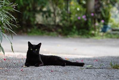 black026cat
