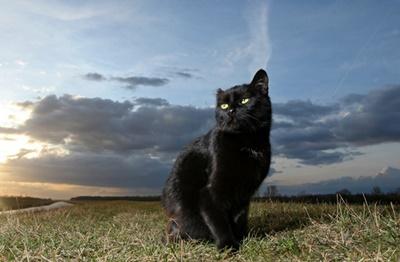 black027cat