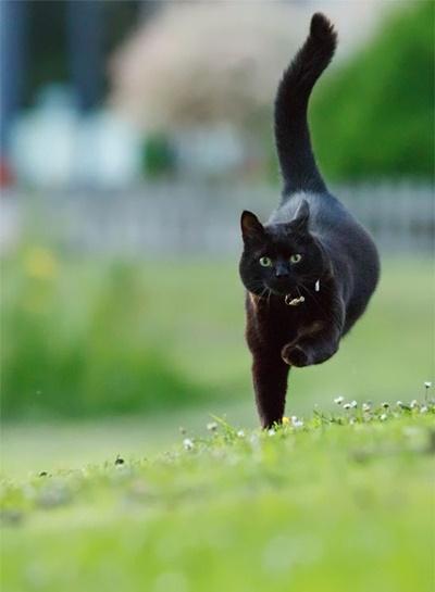 black028cat