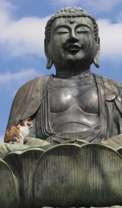 大きな仏像にほっこり。