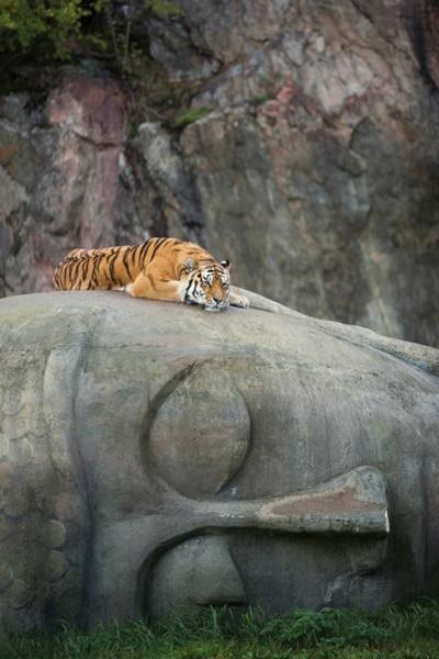 虎も仏像LOVE