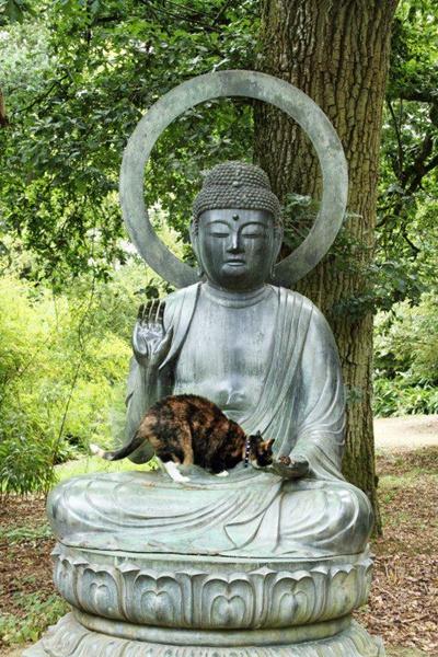猫と仏像。