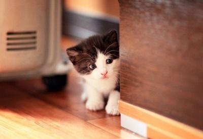 隠れんぼ子猫