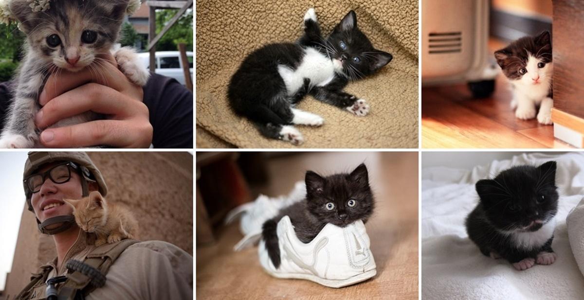 可愛らしい子猫の画像集
