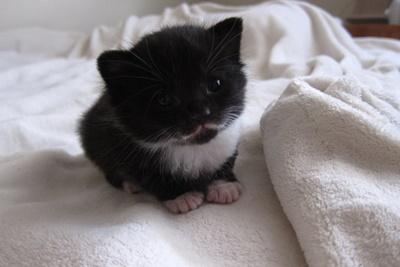 おひげ子猫