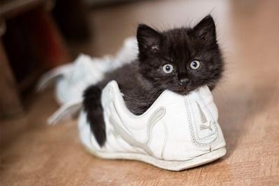 スニーカー子猫