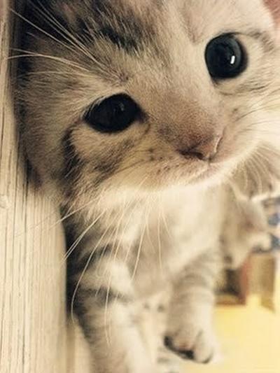 セクシー子猫