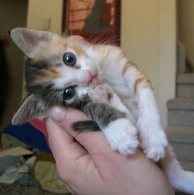 小悪魔子猫