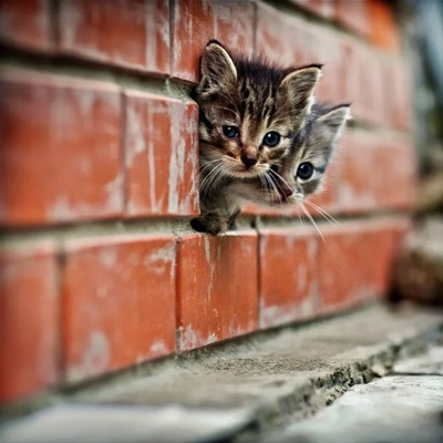 子猫監視員