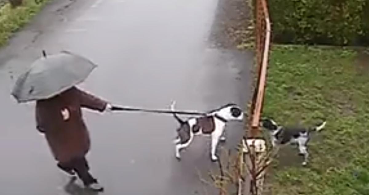 犬の喧嘩を仲裁する猫