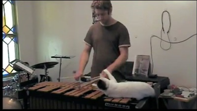 演奏も邪魔猫。