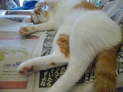 何故か新聞大好き。