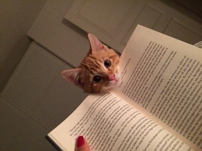 読書の邪魔猫。