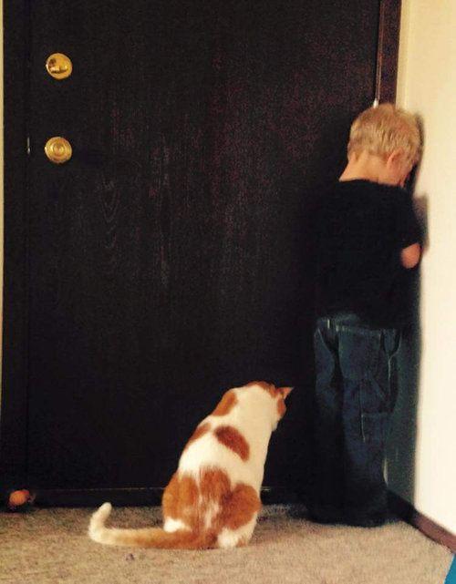 少年と一緒に反省中の猫さん。