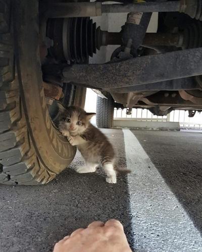 タイヤにしがみつく子猫。