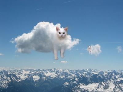 雲になる猫