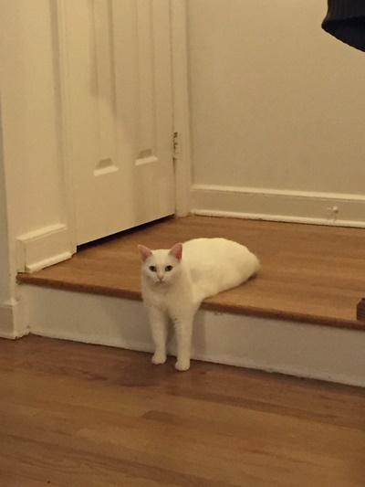 猫の奇跡の1枚!