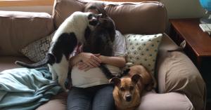 妊娠したママを見守る猫と犬