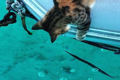 やっぱり魚は気になります!