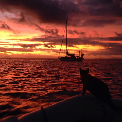 世界を航海する猫!