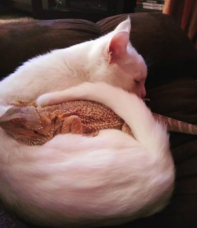 一緒に眠る2匹。