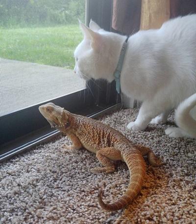 仲良く外を監視!