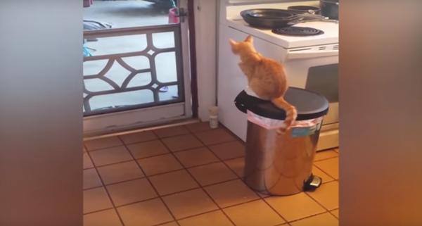 外を見つめる猫。