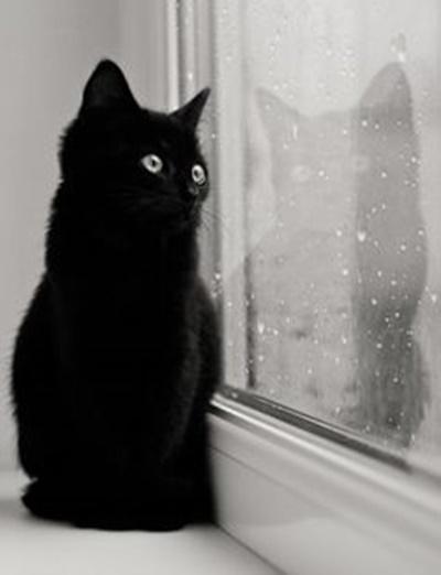 black001cat