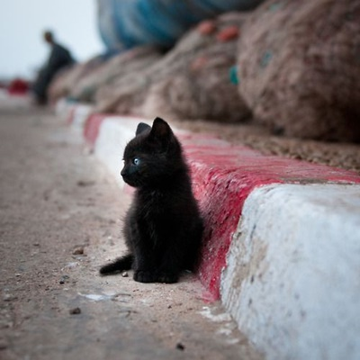 Cats are everywhere in Essaouira. I found this small cat in the port and as a big cat lover I found difficult to chooce the right photo, so I uploaded three of them.