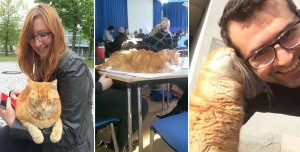 campus-cat-university-cuddles-augsburg-germany-5-horz
