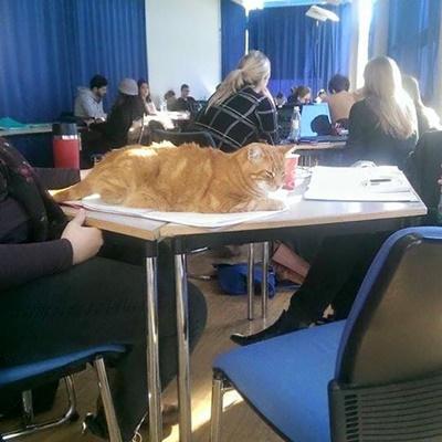 college007cat