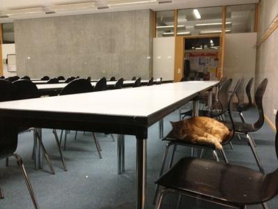 college011cat