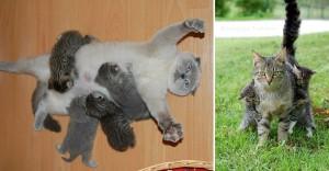 funny-animal-motherhood-photos-cats-dogs-pet-moms-4-5767d6a69d572__605-horz
