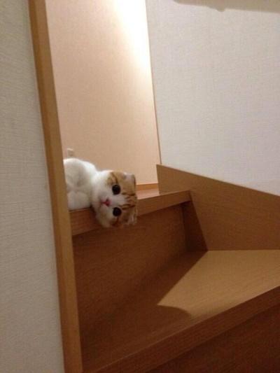 階段覗き!