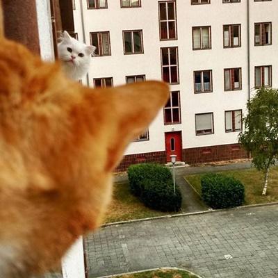 お隣さんと覗き合い。