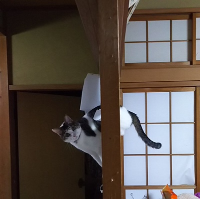 shouji002cat
