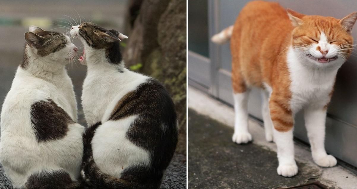 tokyo-stray-cat-photography-busanyan-masayuki-oki-japan-a38-57616a5f77b89__700-horz