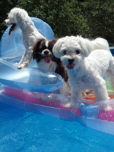 プールで楽しくバカンス