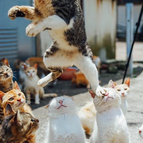 やんちゃ猫のジャンプ