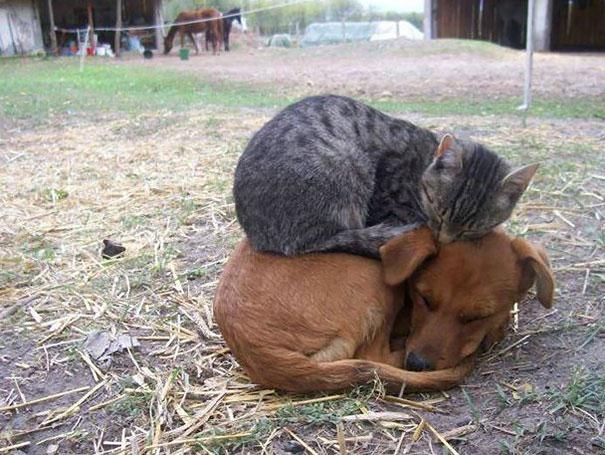 犬もベッドに。